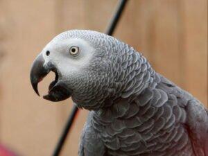 Попугаев в Британии изолировали за оскорбления посетителей зоопарка